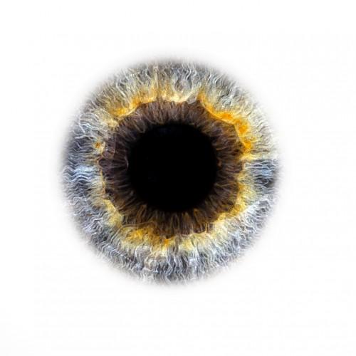 Iris Plastisch